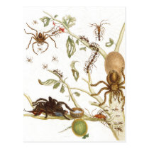 Spiders, ants and hummingbird on a branch of ... postcard
