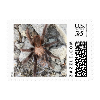 Spiders are scary! postage