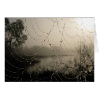 Spider's Morning Card