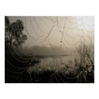 Spider's Morning Poster