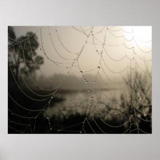 Spider's Morning Print