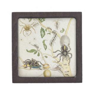 Spiders: Mygole, plate 18 from 'Over de Voorteelin Keepsake Box