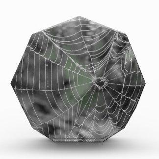 SPIDERS WEB ACRYLIC AWARD