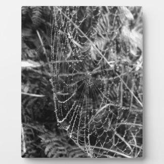 Spiders Web Plaque