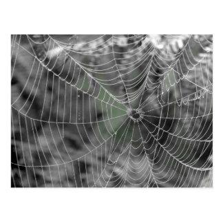 SPIDERS WEB POSTCARD