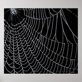 Spider's Web   Print