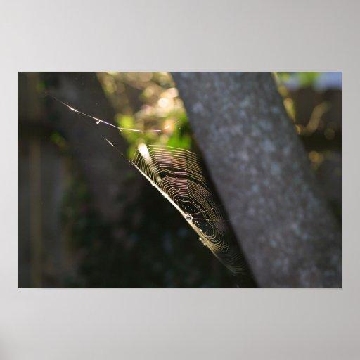 Spiderweb 2 poster