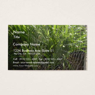 Spiderweb Covered With Dew In The Morning Business Card