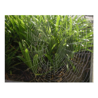 Spiderweb Covered With Dew In The Morning Postcard