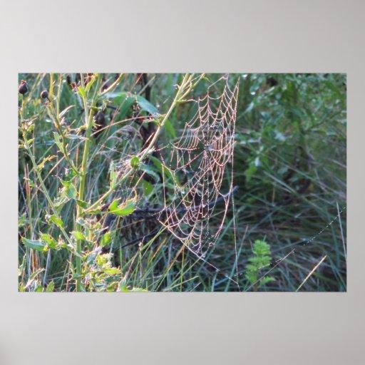 Spiderweb cubierto de rocio impresiones