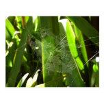 Spiderweb en hojas tropicales postal