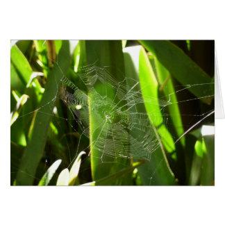 Spiderweb en hojas tropicales tarjeta