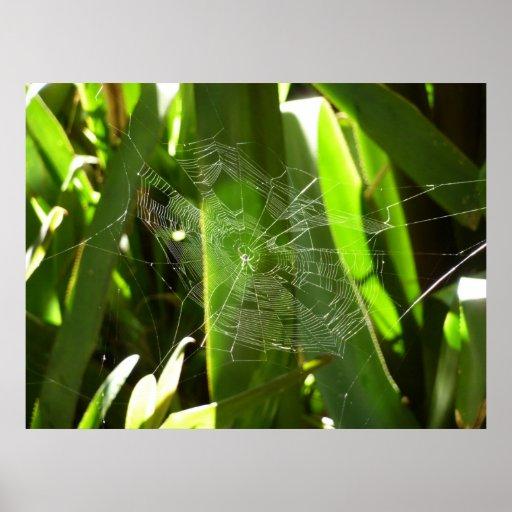 Spiderweb en la impresión tropical de las hojas impresiones