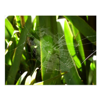 Spiderweb en postal tropical de las hojas