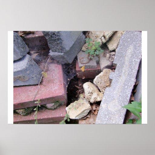 Spiderweb en rocas posters