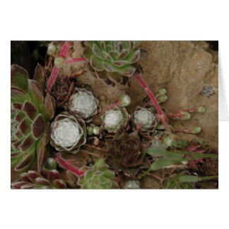 Spiderweb Hens and Chicks Greeting Card