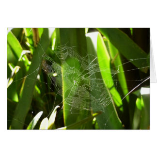Spiderweb in Tropical Leaves Greeting Card