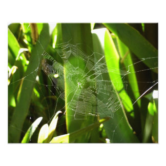Spiderweb in Tropical Leaves Green Nature Photo Print
