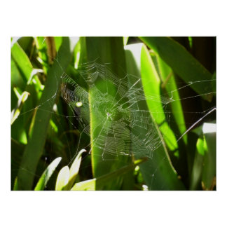 Spiderweb in Tropical Leaves Green Nature Poster