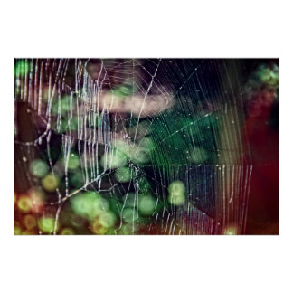 Spiderweb Poster #5476