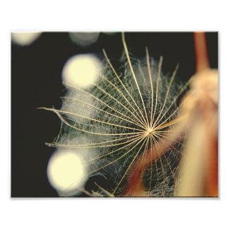 Spiderweb, satellite dish, or flower? photo print