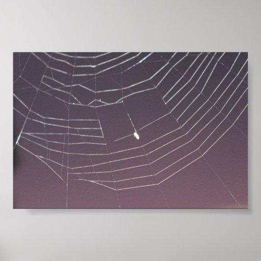 Spiderweb se encendió para arriba impresiones