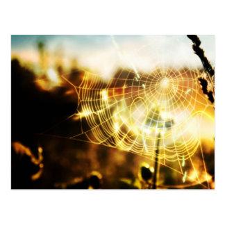 Spiderweb Postales