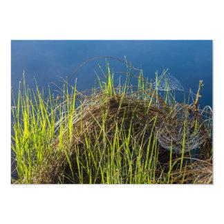 Spiderwebs en el lago comunicados personalizados