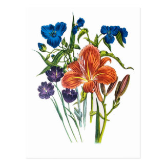 Spiderwort and Daylily Postcard