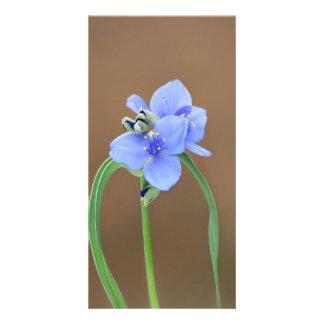 Spiderwort Blossom Personalized Photo Card