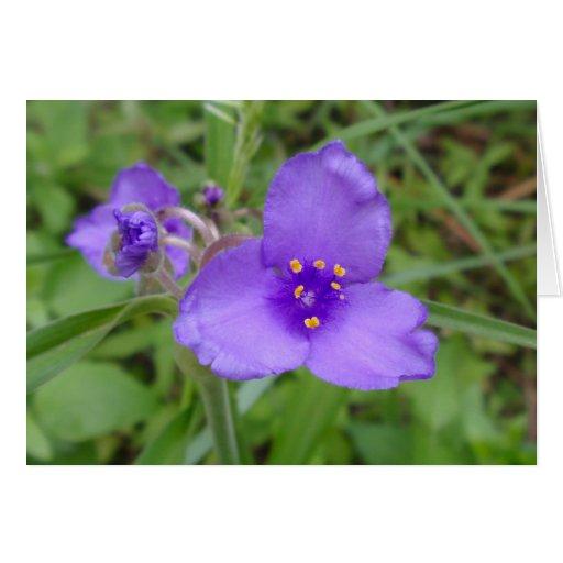 Spiderwort Purple Wildflower Greeting Cards