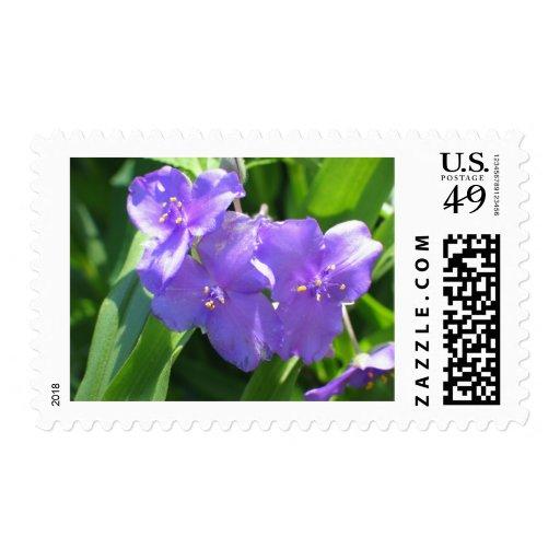 Spiderwort Stamp