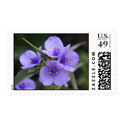 Spiderwort Stamps