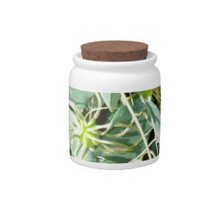 spidery greens candy jars