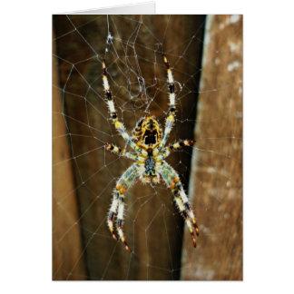 Spidey the Big Brown Spider Card