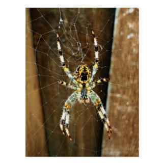 Spidey the Big Brown Spider Postcard