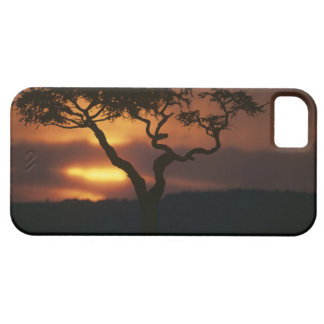 Spiel-Reserve Afrikas, Kenia, Masai-Mara, stellend iPhone SE/5/5s Case