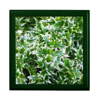 Spiked Leaves Texture Gift Box - Green