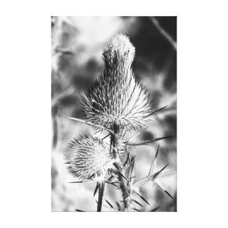 Spiked Thistle Canvas Prints