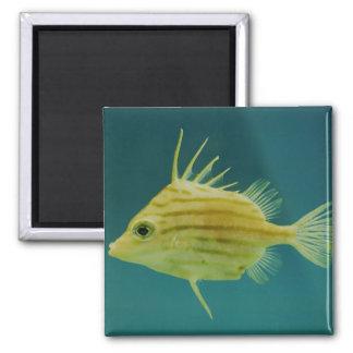 Spikefish Imán Cuadrado