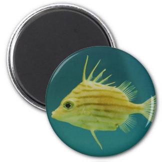 Spikefish Imán Redondo 5 Cm