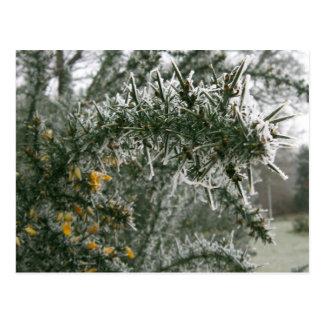 Spikey Frost Postcard