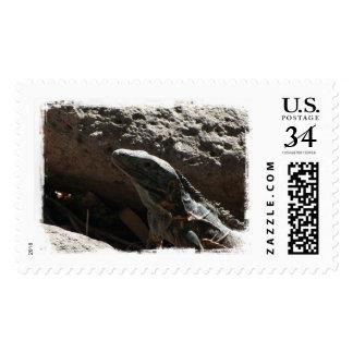 Spiky Iguana Postage