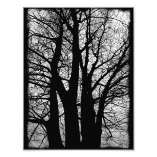 Spilled Ink Trees Photo Print