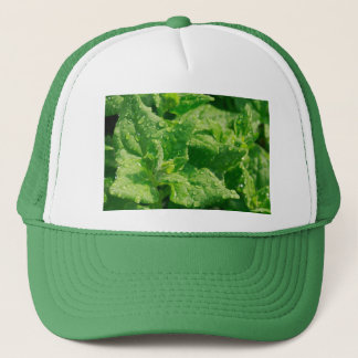 Spinach and raindrops trucker hat