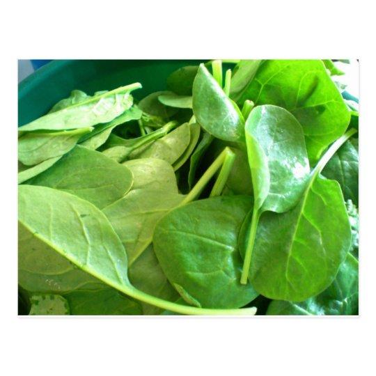 Spinach Postcard