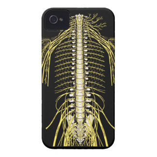 Spinal Nerves Anatomy Image Chiropractic iPhone 4 Covers