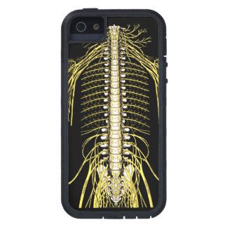 Spinal Nerves Anatomy Image Chiropractic iPhone 5 Cases