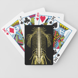 Spinal Nerves Anatomy Image Chiropractic Bicycle Playing Cards