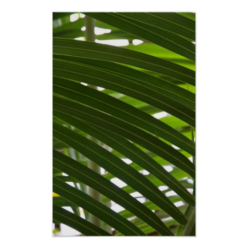Spindle Palm Poster